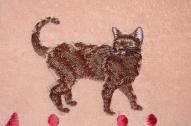 kaķi 07